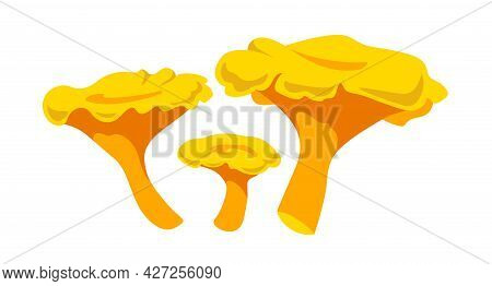 Set Of Forest Edible Mushrooms,  Yellow Decorative Chanterelles, Delicious Food, Color Vector Illust