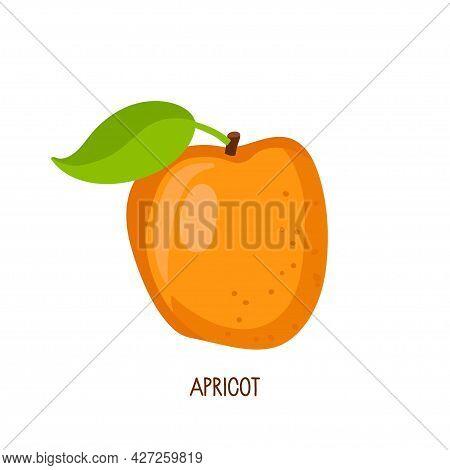 Flat Icon Fresh Orange Apricot Fruit Isolated On White Background. Farmer Market Logo. Organic Tropi