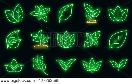 Basil Icons Set. Outline Set Of Basil Vector Icons Neon Color On Black