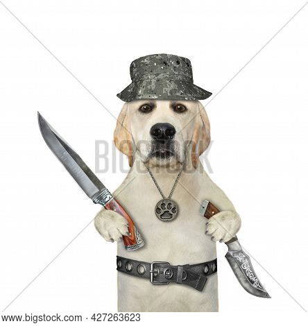 A Dog Labrador Hunter Holds Hunting Knives. White Background. Isolated.