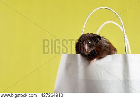 A Small Syrian Hamster Is Sitting In A Paper Bag On A Yellow Background, The Concept: Shopping, Sell