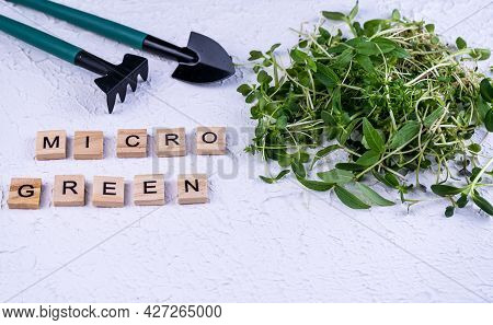 Wooden Letters Of The Word Microgreen. Different Types And Varieties Of Microgreens. Growing. Germin