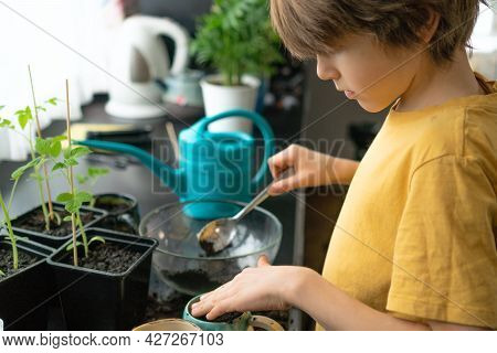 Little Boy Planting Seedlings At Home. An Independent Child Is Busy With A Hobby With Potted Plants.