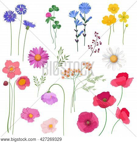 Set Of Wildflowers And Plants. Design Elements For Cards, Wedding Invitations, Etc. Vector Illustrat