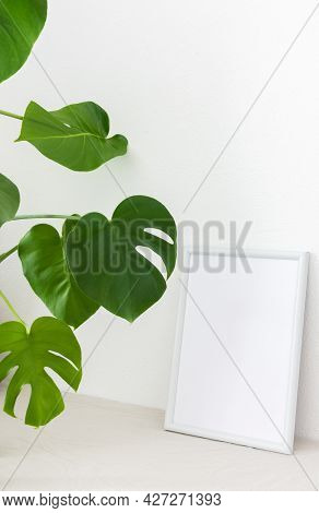 Home Decor Mocap, Empty Picture Frame Near White Painted Concrete Wall, Green Monstera Home Flower