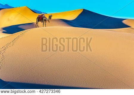 Well-groomed camel, decorated with colorful garlands, stands atop the sand dunes. Orange sunrise in the desert. Concept of active, ecological and photo tourism