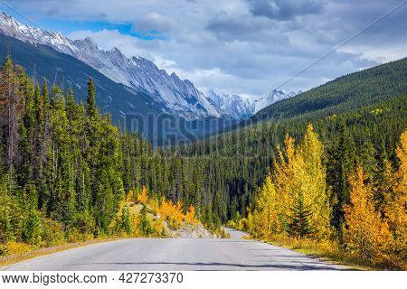 Mountain peaks are covered with snow and glaciers. The Highway 93 in the Rocky Mountains of Canada. Asphalt road among green coniferous forests and orange autumn aspens.
