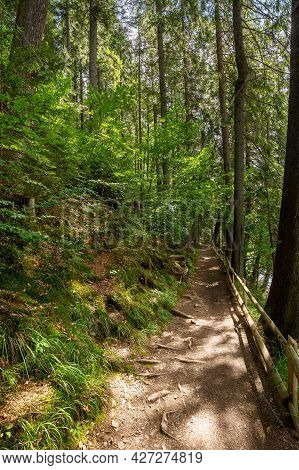 Trail Through Park. Beautiful Nature Scenery In Summer. Sunny Weather In The Forenoon. Great Place F