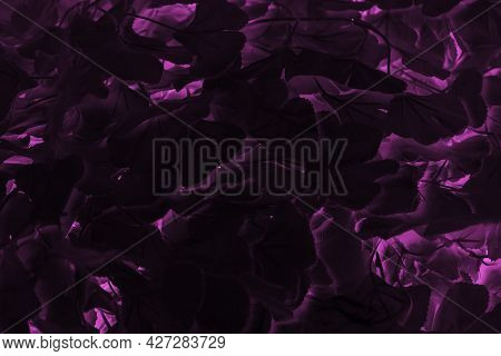 Pink And Violet Abstract Dark Creative Background.