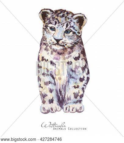 Leopard Watercolor Illustration. Snow Leopard Portrait. Cub Leopard
