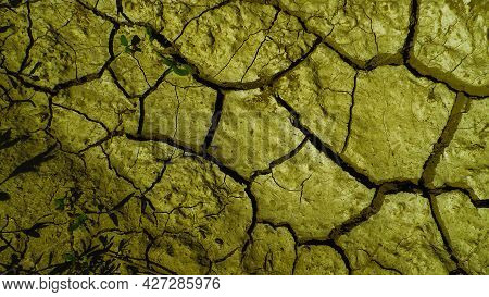 Green Ground, Green Plants. Abstract Green Background. Green.