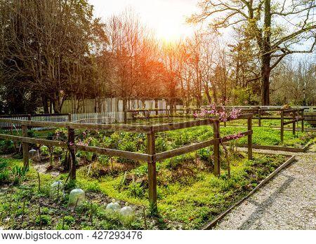 Beautiful traditional vegetable garden in sunshine