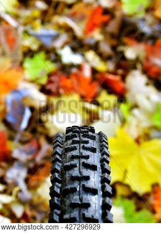 Bicycle Wheel On The Background Of Fallen Leaves
