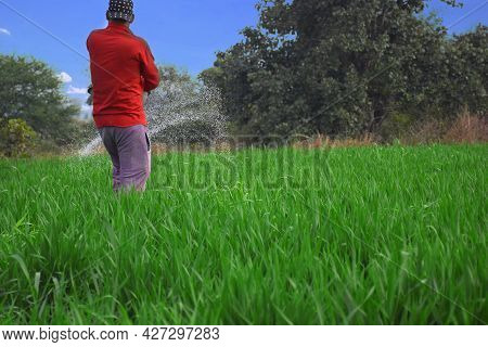 Fertilizer Given To The Indian Farmer Giving Fertilizer In Wheat Fields To Increase Fertilizer Capac