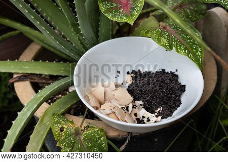 Crushed Egg Shell And Spent Coffee Grounds In Bowl Against Plants. Natural Organic Fertilizers For G