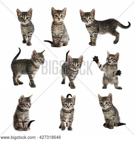 Adorable Tabby Kittens On White Background, Collage