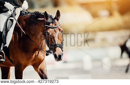 Equestrian Sport. Portrait Sports Stallion In The Bridle.the Legs Of The Rider In The Stirrup, Ridin