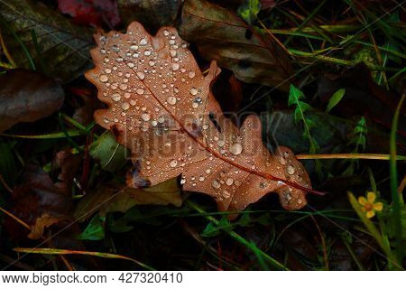 A Yellow Fallen Leaf With Drops Of Water Lies On The Ground In The Fall