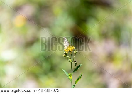A White Butterfly With Folded Wings Landed On A Yellow Flower In A Meadow, A Strong Rear Blur