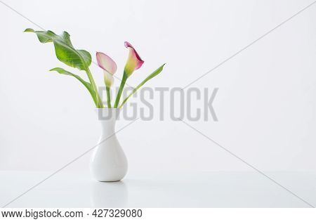 Pink Calla Lily In Vase  On White Background