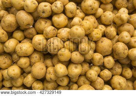Organic Creole Potato In The Traditional Colombian Market - Solanum Phureja