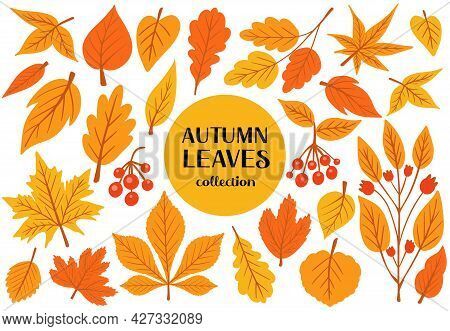 Set Of Colorful Autumn Leaves And Berries. Isolated On White Background. Simple Cartoon Flat Style.