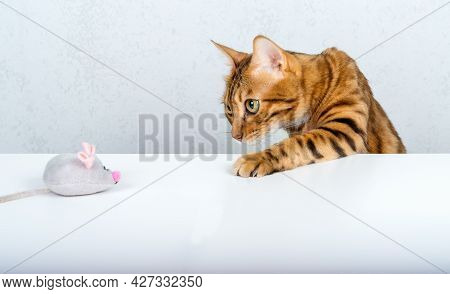 A Funny Bengal Cat Plays With A Small Plush Gray Mouse On The Table.