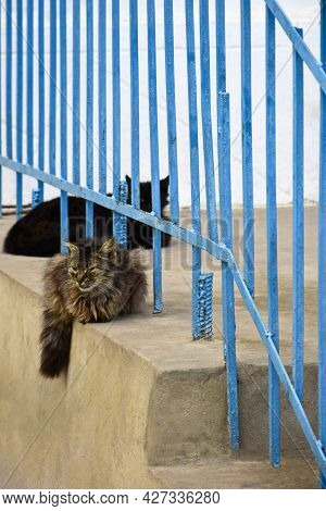 Two Cats Of Black And Multi-colored Coloring Are Resting On Concrete Porch With Blue Railing. Fluffy