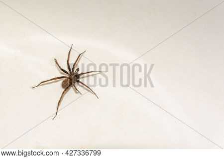 Spider On A White Background, Copy Space, Spider Insect, Terribly Unpleasant.