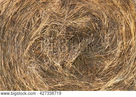 Close-up Swirling Yellow Straw Or Hay For Texture Background
