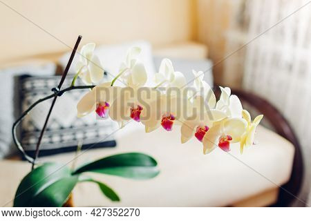 Interior Of Living Room. Yellow Orchid In Blossom Blooming On Coffee Table By Candle. Home Decorated