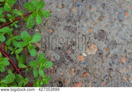 Concrete Stony Wet Blurred Background With A Bright Green Twig With Raindrops In Focus Close-up In T