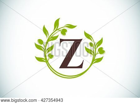 Initial Letter Z Sign Symbol With Olive Branch Wreath. Round Floral Frame Made By The Olive Branch.