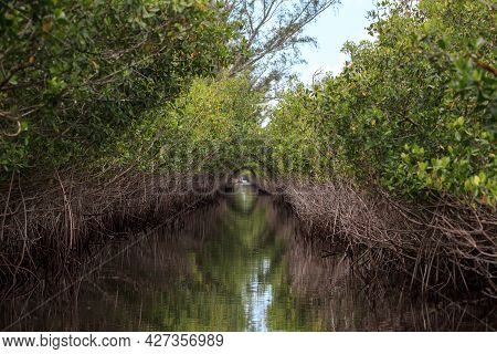 Riverway Through Mangrove Trees In The Swamp Of The Everglades In Everglade City, Florida.