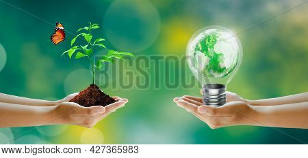 Hand Holding Tree And Light Bulb With World Crystal Glass Inside. Butterfly On Sunny Green Grass Bok