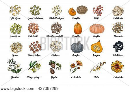 Vector Food Icons. Colored Sketch Of Food Products. , Nuts, Herbs, Beans, Pumpkin, Cereals.