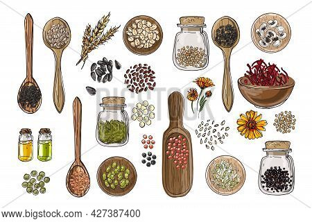Vector Food Icons. Colored Sketch Of Food Products. , Nuts, Herbs, Beans, Cereals, Oil, Jars, Wooden