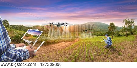 Panorama Agriculture Drone Fly To Sprayed Fertilizer On Rice Fruit. Smart Farmer Use Drone For Vario