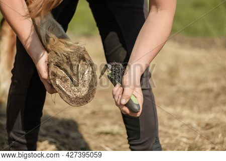 Caucasian Woman Is Picking Out A Dirty Hind Foot Of Her Horse In Outdoors. Concept Of A Hoof Care Of