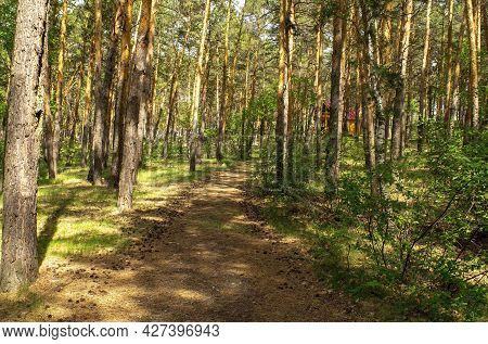 Empty Alley In The Middle Of A Pine Forest Leading To A Small Wooden House In The Summertime During