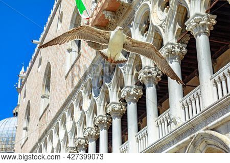 A Flying Seagull In San Marco Italian Square Of Venice City Of Italy With Doges Palace Colonnade Beh