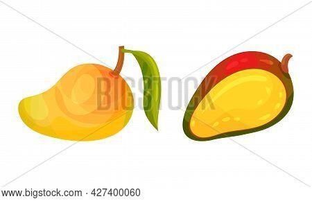 Ripe Mango As Tropical Edible Stone Fruit Vector Set