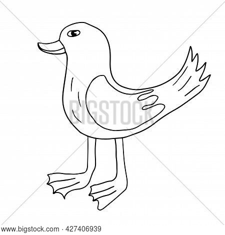 Cartoon Doodle Linear Duck Isolated On White Background. Cute Sketch Of A Bird.