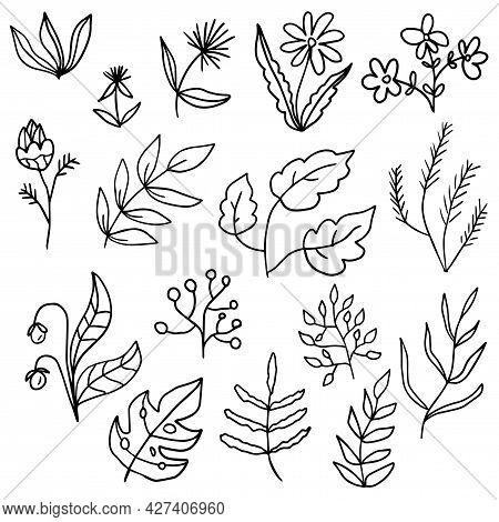 Floral Set Of Black Outline Hand Drawn Elements, Flowers, Tree Branch, Bush, Plant, Tropical Leaves,