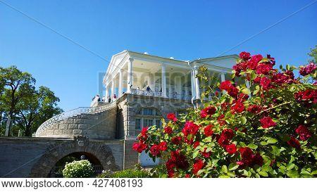Pushkin, St. Petersburg, Russia - July, 2019: Shrub Bright Red Climbing Rose Flammentanz In Flower G