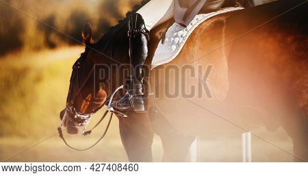Rear View Of A Bay Horse With A Bridle On Its Muzzle And A Rider In The Saddle, Walking On An Autumn