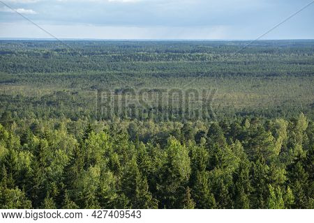 Landscape Of Coniferous Forest. Estonian Forest Landscape Seen From The Lookout Tower At Iisaku, Alu