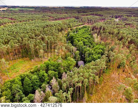 Aerial View. Green Forest And River Brda, Canoe Trail In Tuchola National Park, Poland. Green Summer