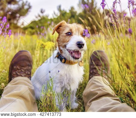 Obedient Happy Smiling Panting Pet Dog Puppy Sitting With His Owner In The Grass In Summer