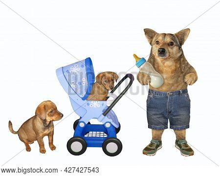 A Dog Husky With A Bottle Of Milk Is Near A Blue Stroller With Its Puppies. White Background. Isolat